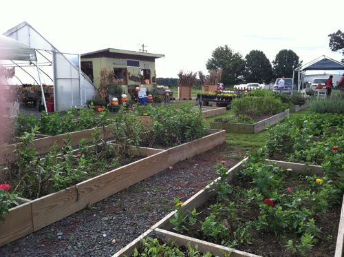 Raised garden beds at Miller Farms