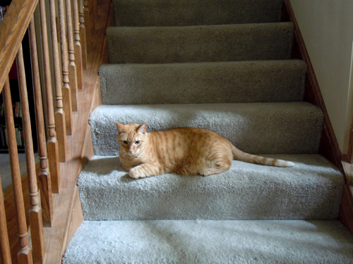 Guardian of the Stairs