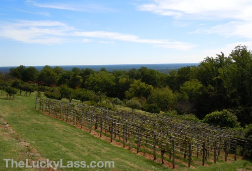 Orchard Vineyard and View