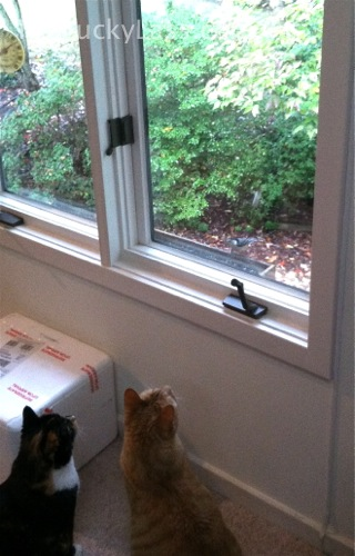 Cats Bird Watching