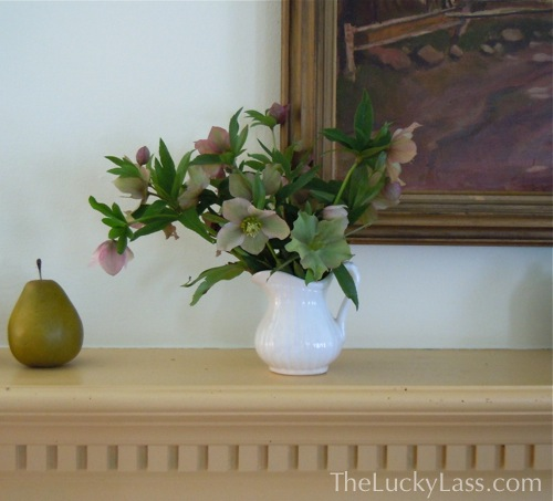 Hellebores on Mantle