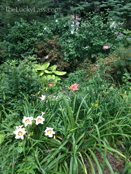 Daylilies and More in the lower garden