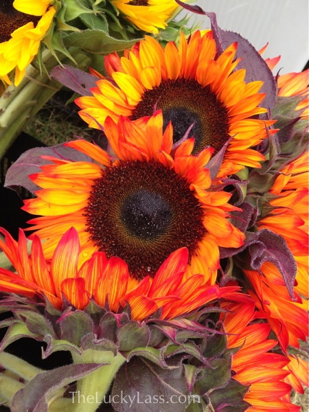 Sunflowers at Farmers Market