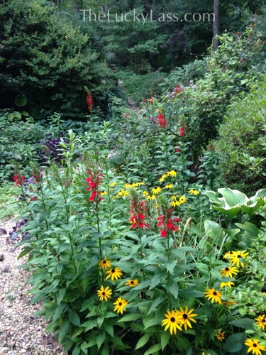 Cardinal Flowers and Black Eyed Susans