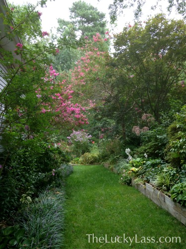 Mid Summer View of the Side Yard