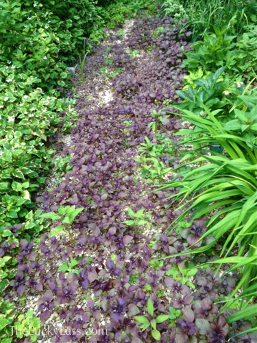Path with weeds